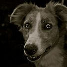 Brighteyes (Greyhound x Collie) by Lou Wilson