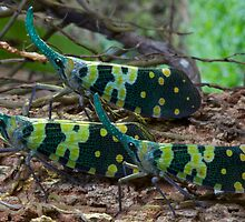 Three bugs with horns, Thailand by John Spies