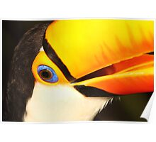 Detailed Portrait of a Toco Toucan at Iguassu, Brazil.  Poster