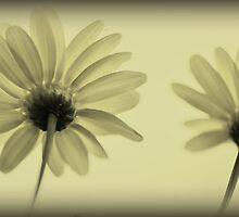 Cellophane flowers by MarieG