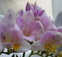 Scented Freesias by PollyBrown