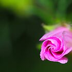 In the pink by JanSmithPics