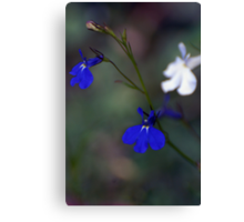 Blue, blue and white Canvas Print