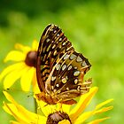 Brown Elfin Butterfly by Hope Ledebur