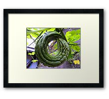 "bitter ""O""  on the vine Framed Print"