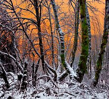 Snow Glow by Charles & Patricia   Harkins ~ Picture Oregon