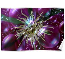 Bubbly Clematis Poster