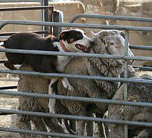 Move It Sheep! by aussiebushstick