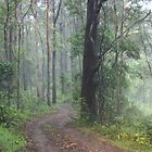 Fog in the Bush by aussiebushstick