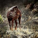 wild pony and shy by carol brandt
