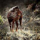 wild pony and shy by carol brandt