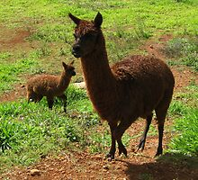 Mum and Little Alpaca by Vanessa Barklay