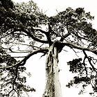Crooked Tree in Black & White by Erin Johnson