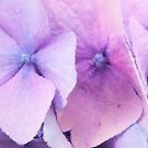 In Pastel Shades by elsha