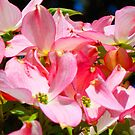 Bright Colorful Pink Dogwood Flowers art prints Baslee by BasleeArtPrints