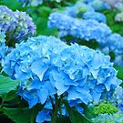 Blue Pink Hydrangea Flowers Garden Calendars by BasleeArtPrints