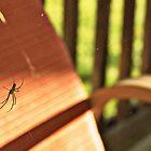 Spider by SarahMistake