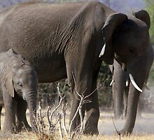 Mother and Baby Elephant by JenniferEllen