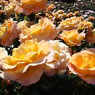 Rose Garden Flowers art prints Orange Pink Roses by BasleeArtPrints