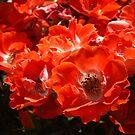 Red Roses Flowers Garden art print Floral Baslee Troutman by BasleeArtPrints