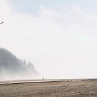 Eagle. Neskowin, Oregon. by Christina Weber