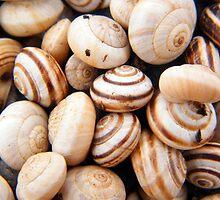 Snuggly Snails by Caroline  Lloyd