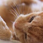 Ginger Cat by BecsPerspective