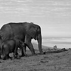Elephant Cow and Calf by Adéle Van Schalkwyk