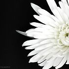 White on Black by Julie-anne Cooke Photography