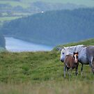 Horse and Foal by Anthony Thomas