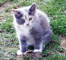 Barn Kitten by WeeZie