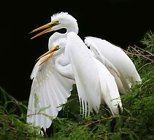 Egret Babies in the Nest by Paulette1021
