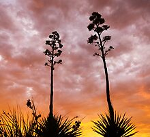 A Pair of Agaves by Sue  Cullumber