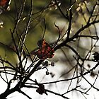Still Hanging  -Winter Series- by Evita