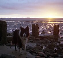 Sunset beach with Indy by Michael Haslam