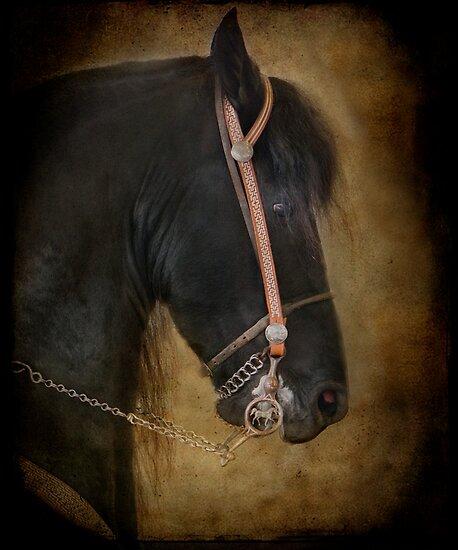 The Dark Horse by TeresaB