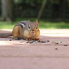 "Chipmunk by Alexa ""Lexi"" Platts"