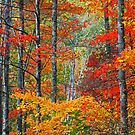 TREES,AUTUMN by Chuck Wickham