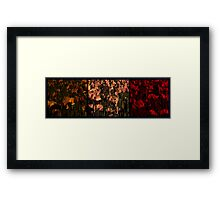 A Triptych of Poppies Framed Print