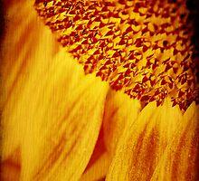 Sunflower by Silvia Ganora