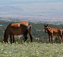 Wild Mustangs #3 by Ken McElroy