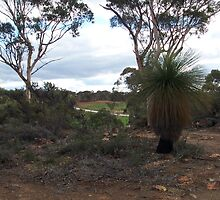 The Road to Toodyay by zoolou