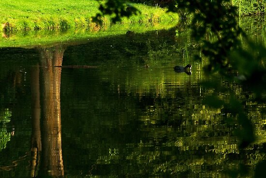 Coot's upside down water world by steppeland