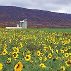 Blue Mountian and Sunflowers by Cassy Greenawalt