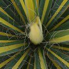Weird Plant by Linda Fury