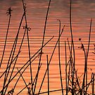 Lake Sunset by Lisa Holmgreen