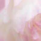 Summer softness by Anne Staub
