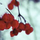 Winter Berry by Sorted3000