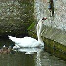 Swan bell ringers! by Meladana