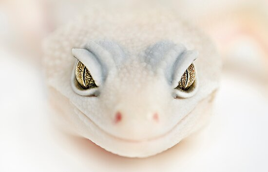 albino gecko welcome by Yves Rubin